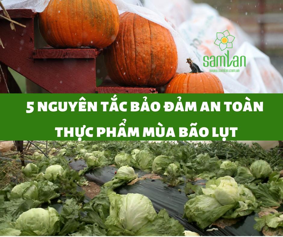 an toàn thực phẩm mùa bão lụt
